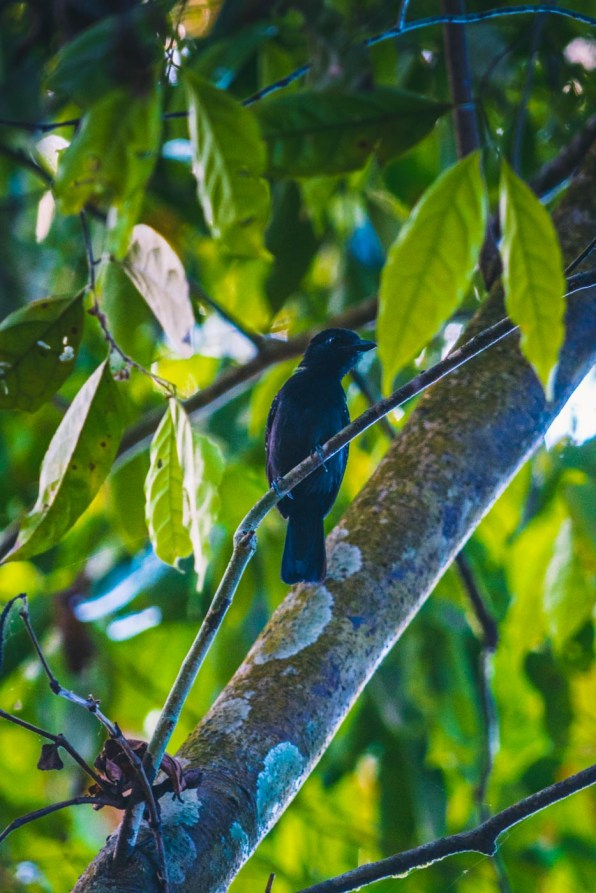 Costa Rica Osa Corcovado-7836