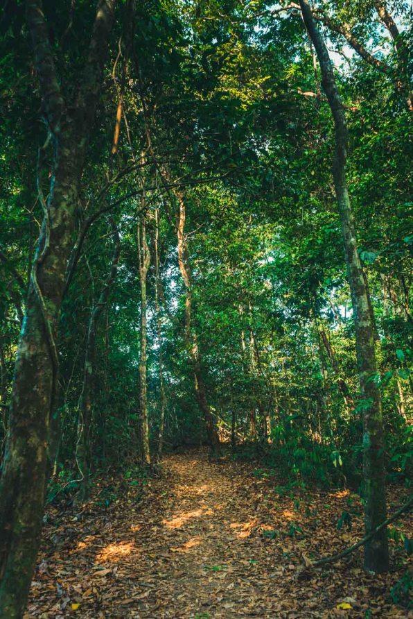 Costa Rica Osa Corcovado-9738
