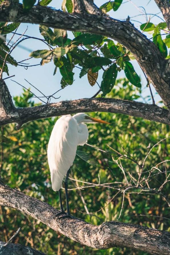 Costa Rica Osa Mangrove-7278