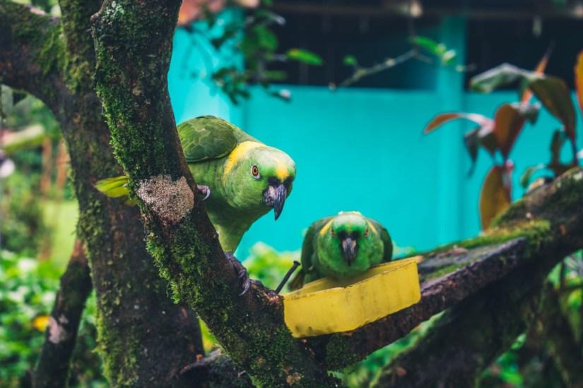 Costa Rica Tenorio-4295