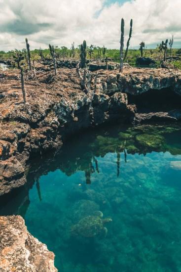 Ecuador Galapagos Isabela tuneles-3616