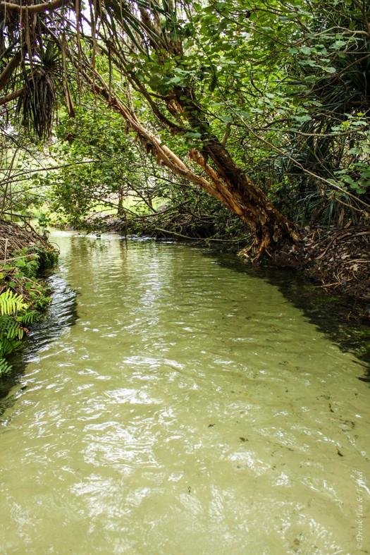 Fraser Island Tour: Eli Creek