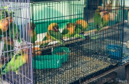 Bird Market in Indonesia