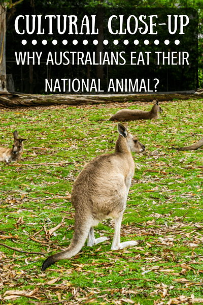 Tourist trap or reality? Do Australians really eat kangaroo?