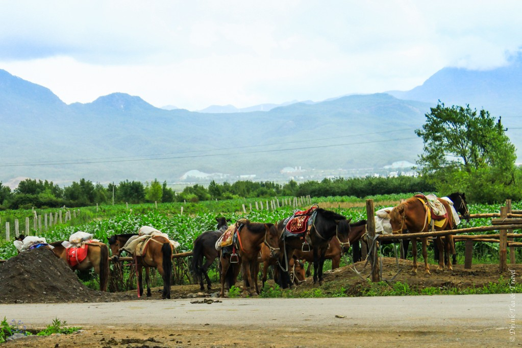 Ready to saddle up the horses for a ride in the countryside, Lijiang, China