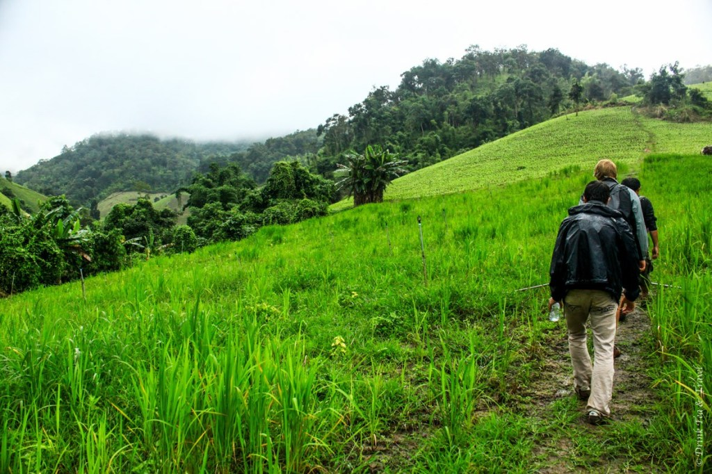 Hiking through the rice paddies on our way to remote villages North of Pai