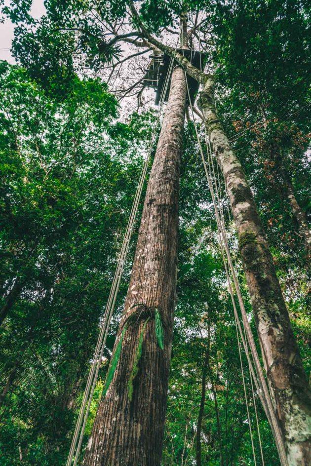 Peru Amazon-8214