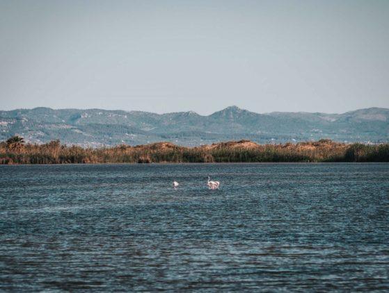 Spain Catalonia Ebro Delta Natural Park-08973