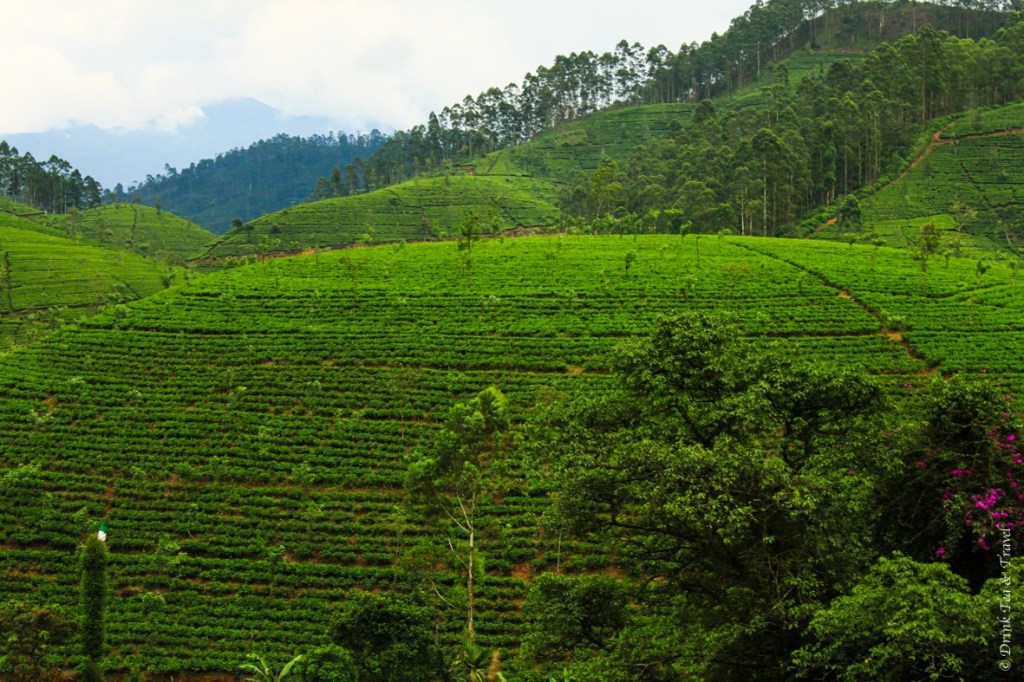 Rolling hills of tea plantations in Hill Country, Sri Lanka