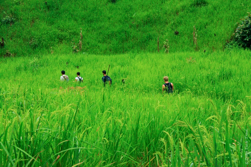 Trekking through the rice paddies on the way to the hilltribe village in Northern Thailand