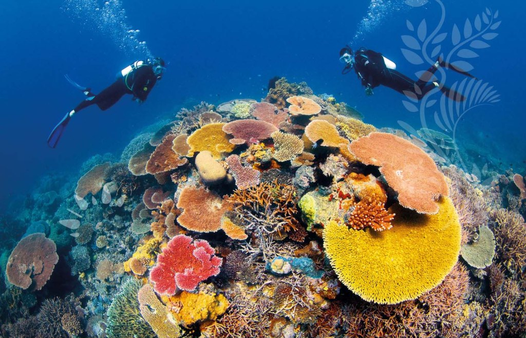 Coral at the Great Barrier Reef, Queensland
