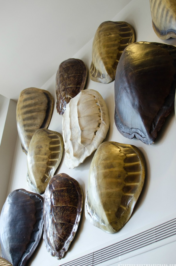 Faux Turtle Shells  How to Decorate with Them  Where to