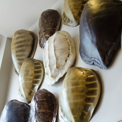 Single Sofa Chair Three Seater Sofas Faux Turtle Shells - How To Decorate With Them & Where ...