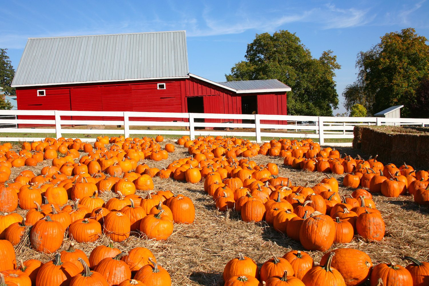 Fall Harvest Computer Wallpaper Largest Pumpkin Patches In The U S Drive The Nation