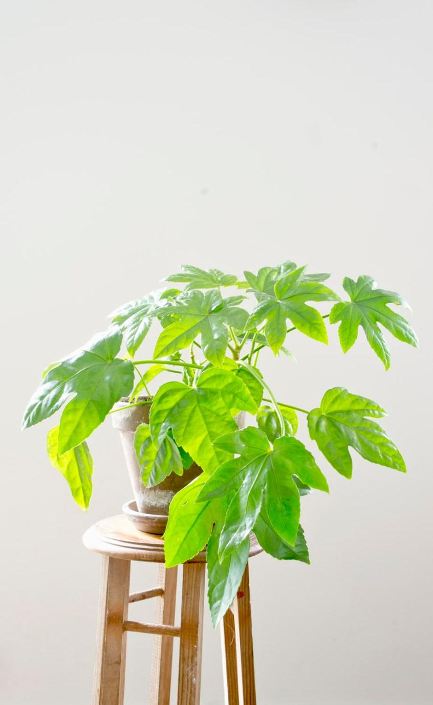 5 plantas fáciles de cuidar · 5 easy indoor plants | Blog DIY decoración
