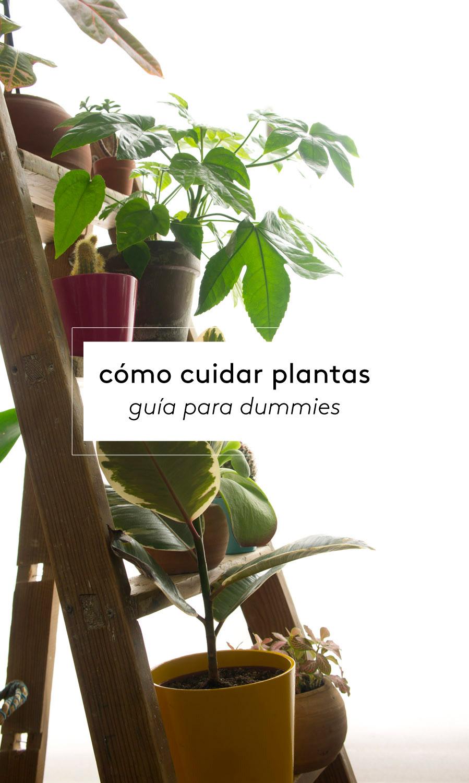 C mo cuidar plantas gu a para dummies decoraci n online - Guia para decorar ...