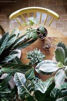 Ideas para decorar con plantas y darle un toque verde a tu casa