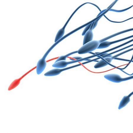 sperm donasyonu