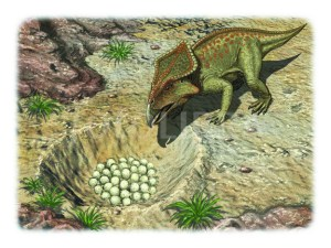 ILLUSTRATION-PROTOCERATOPS WITH EGGS