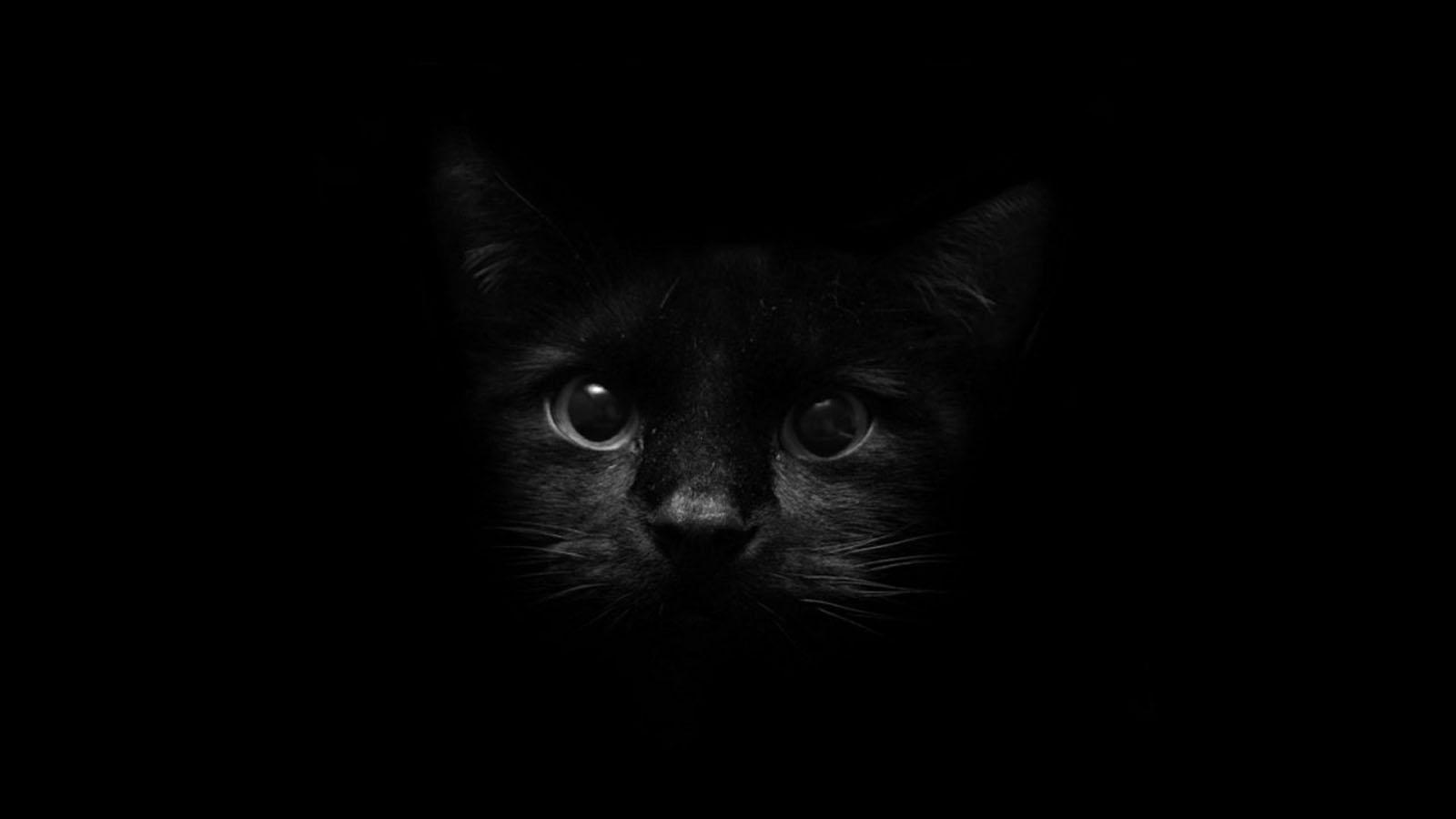Black Color - Best, Cool, Funny