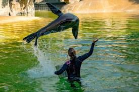 Seelöwe im Zoo Berlin