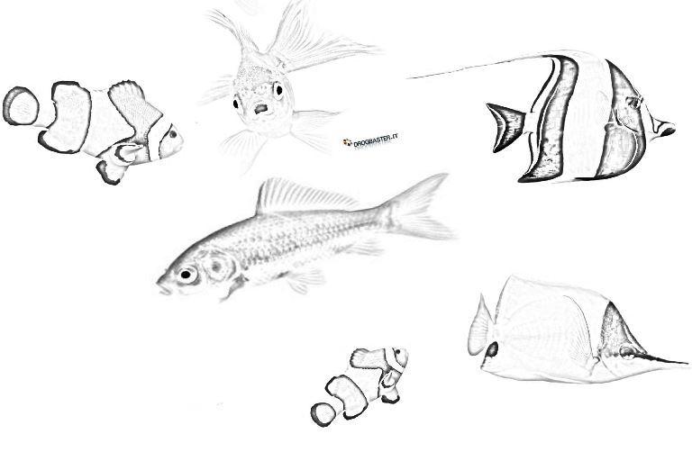 Pesci disegni da stampare e colorare for Immagini di pesci da disegnare
