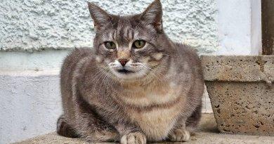 CAT_20180516-182005-0027-LF-CP-0-OKK_0800x0445