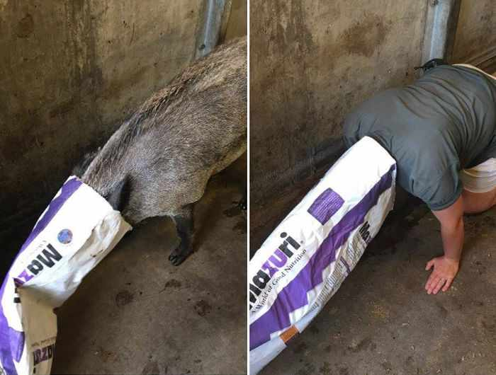 16 Funny Pictures of Zookeepers as Animals Will Make Your Day -05