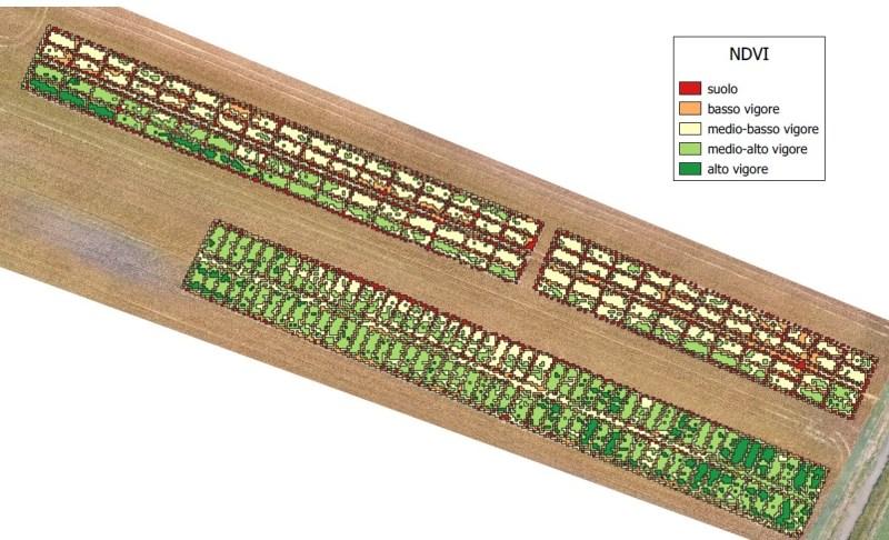 grano-ndvi-griglia-800x486 Agri2000