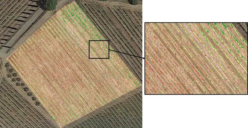 ndvi-pixel-vigneto-800x414 Indice NDVI in Viticoltura