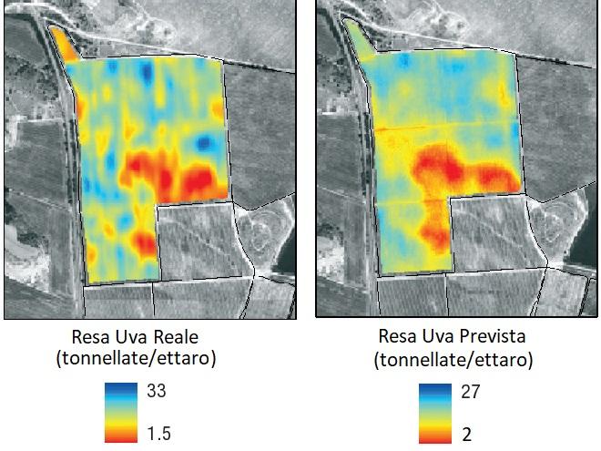 previsione-resa-vigneto Previsione della Resa Agricola con Droni e Satelliti