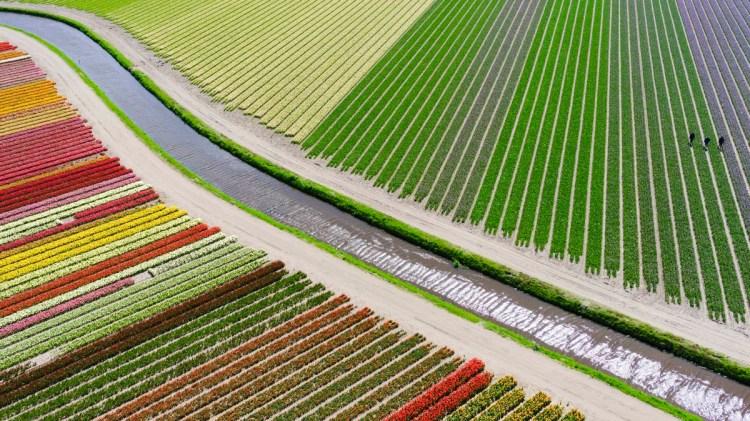 Between Sassenheim and Voorhout, The Netherlands