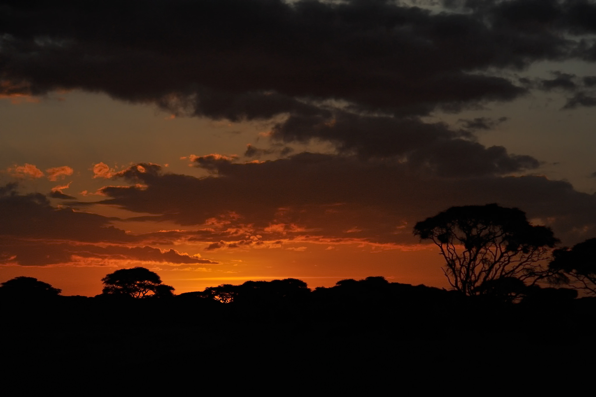 Amboseli National Park, Kenya, East Africa, Diana Robinson Rebrary 18, 2012