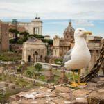 Droni e Gabbiani, come volare se gli uccelli attaccano il drone? [MiniHowTo]