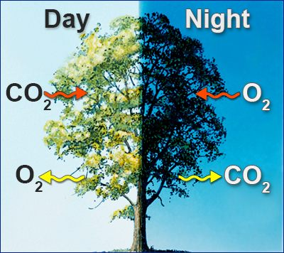 C:\Users\GRS\Desktop\photosynthesis-and-respiration-in-plants.jpg
