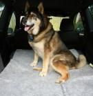 csp protecting car interior