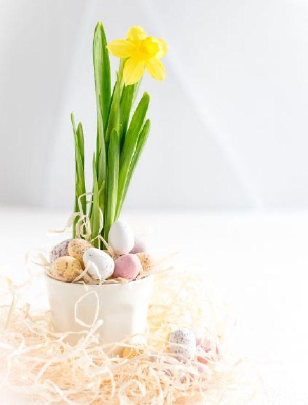 Jonquilles et oeufs de Pâques