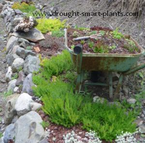 Xeric Gardens  xeriscape landscaping with drought