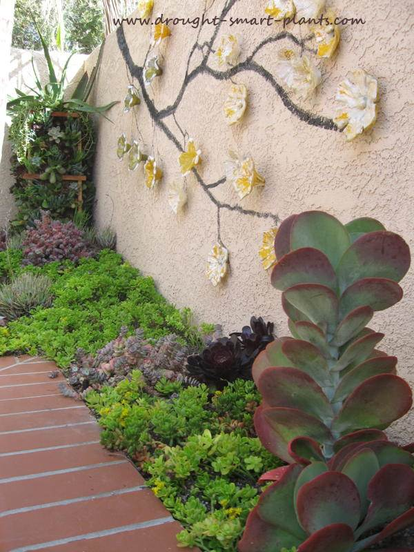 Pocket Gardens  jewel like focal points in the xeriscape