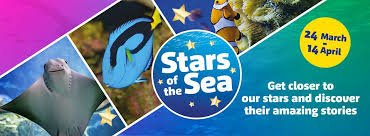 Stars of The Sea