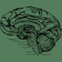 Brain Anatomy Design