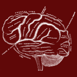 Brain Labels - Vintage Anatomy 101 - Design