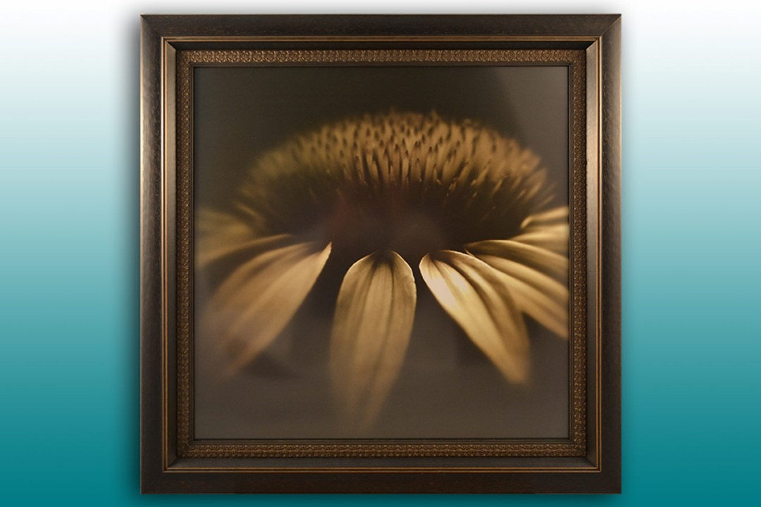 Framed sunflower image.