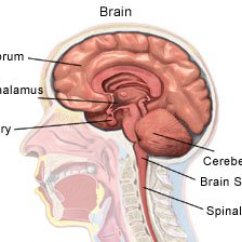 Left Side Brain Functions Diagram Yamaha G9 Golf Cart Wiring Hemispheric Stroke Aftercare Instructions What You Need To Know When The Cells Of Your Are Damaged Or Die May Lose Control Certain Body Controls Language And