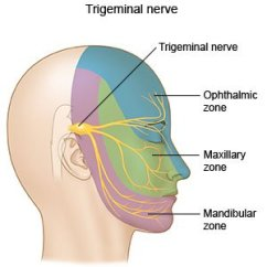 Trigeminal Nerve Diagram Westinghouse Fridge Thermostat Wiring Neuralgia What You Need To Know Causes