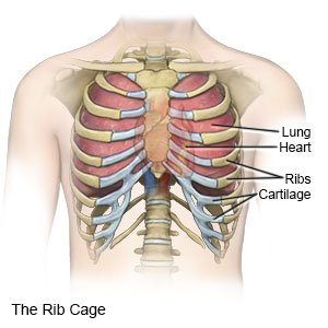 diagram of ribs and organs iphone earphone wiring rib fracture in children what you need to know cage