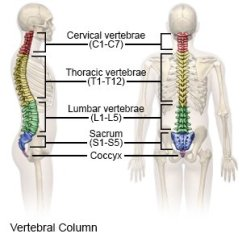 Cervical Vertebrae Diagram Bmw Wiring Color Codes Fracture What You Need To Know Causes A