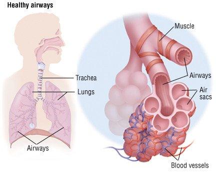 Kronik Obstrüktif Akciğer Hastalığı (KOAH)