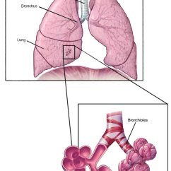 Stuffy Nose Diagram Ecobee3 Wiring Bronchiolitis Disease Reference Guide - Drugs.com