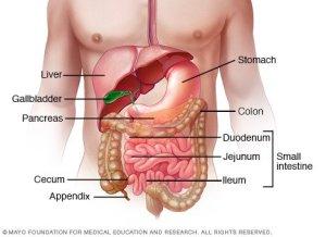 Inflammatory bowel disease (IBD) Disease Reference Guide